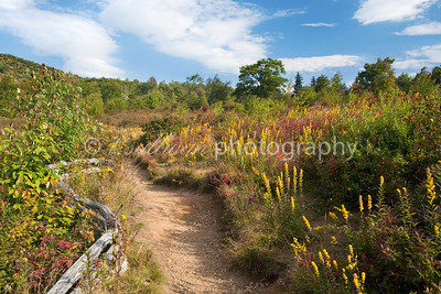 Wildflowers and blueberry bushes line a hiking trail at Graveyard Fields in North Carolina.