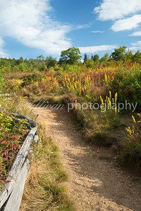 Wildflowers and blueberry bushes line the hiking trail at Graveyard Fields in North Carolina.