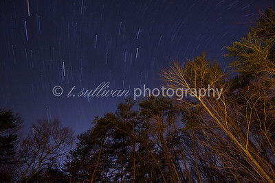 Star trails above the trees