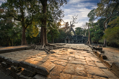 Ta Prohm, Angkor Wat Archaeological Park, Cambodia