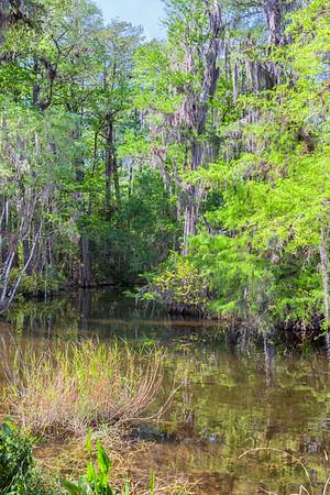 Everglades Swamp II