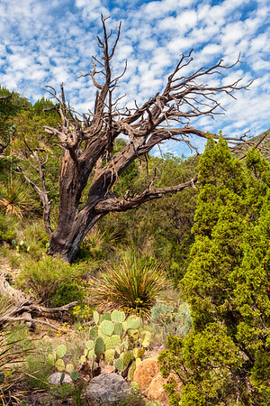 McKittrick Canyon,  Guadalupe National Park