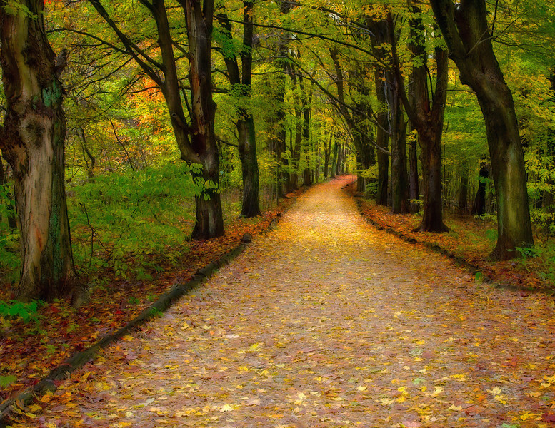 10/20/06<br /> <br /> Follow the Yellow Brick Road.