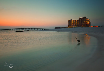 Emerald Grande @ Harborwalk Village Photo