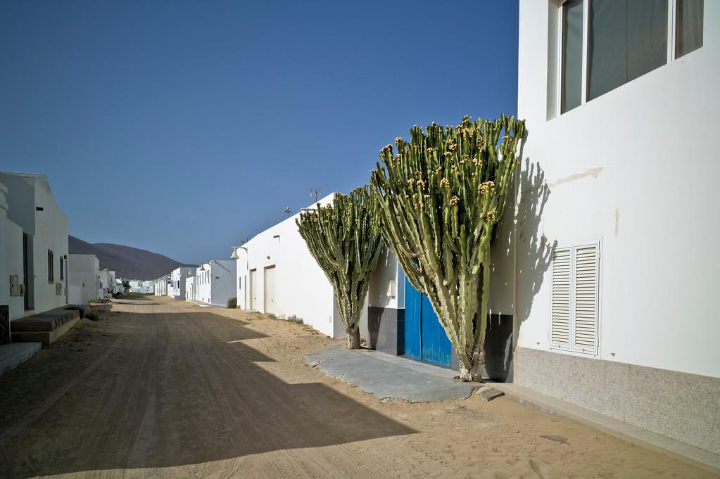 Strasse mit Kaktus