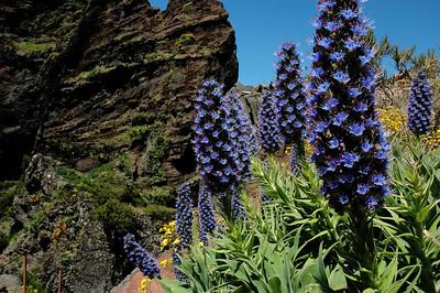 Blume Madeiras