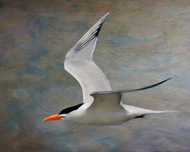 BirdC_1