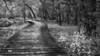 Kingfisher Trail