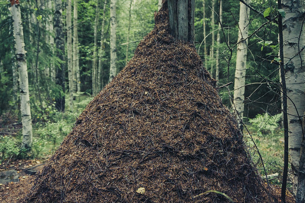 stack of ants,,