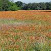 Rusty Field