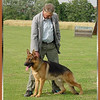 Karl Fuller, owner & breeder of Kirschental Kennels in Germany stacks Nego vom Kirschental.