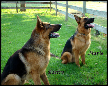 Bastro and his young girl friend, Marie, waiting for the KONG to be throwed!