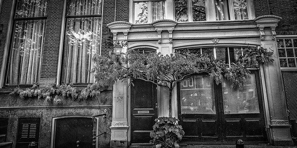 Wisteria growing along a canal row house, Amsterdam