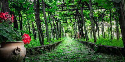 Path through a vinyard, Ravello, Italy