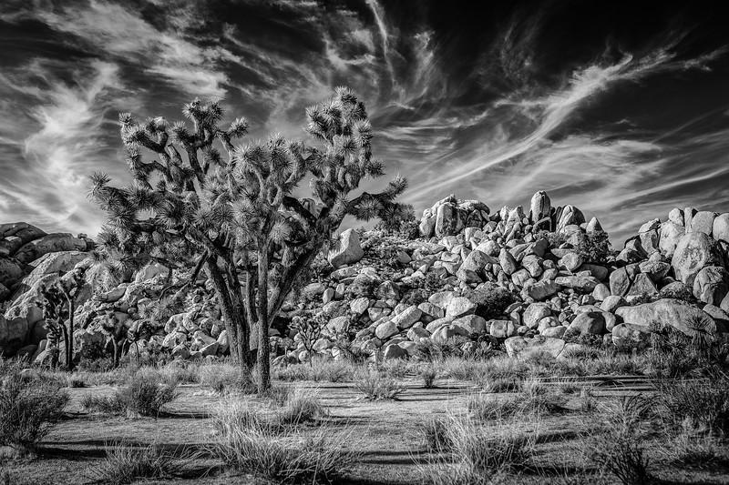 Joshua Tree-0004-Silver.jpg