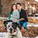 Razor the Rottweiler x Pitbull and his family