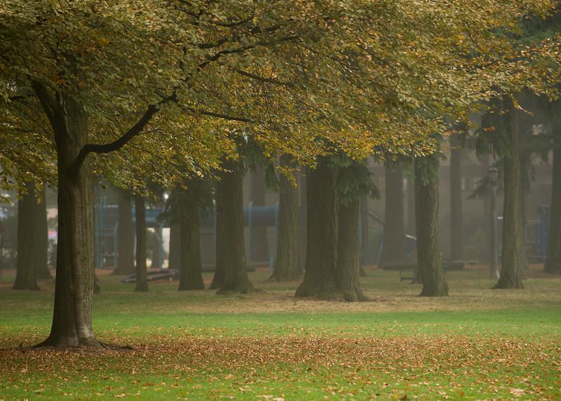 Fall Fog 7210