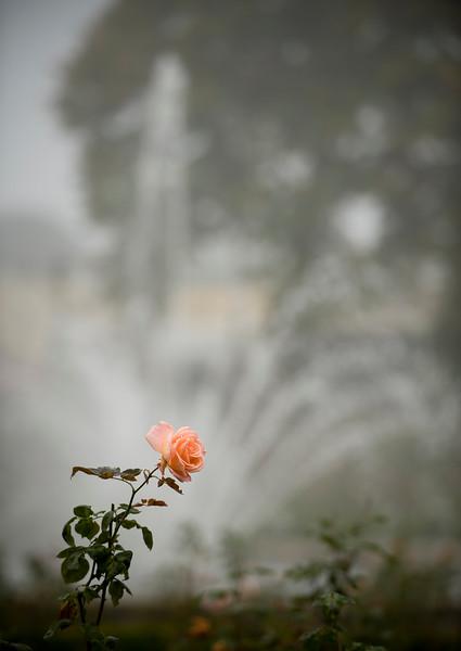Fall Fog 7200