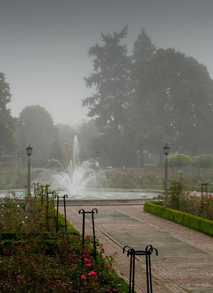 Fall Fog 7217