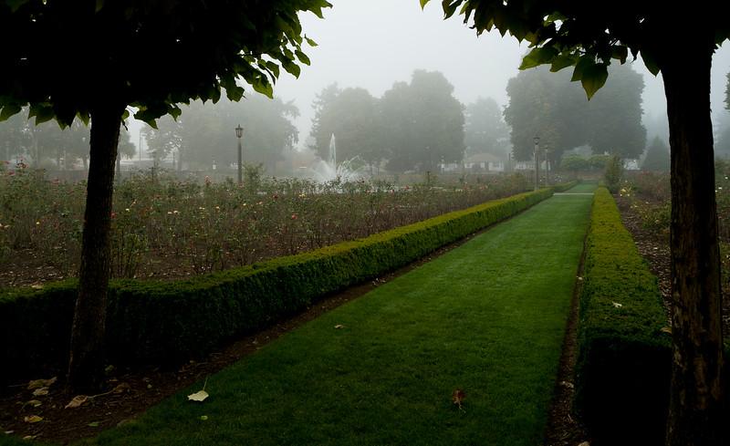 Fall Fog 7176
