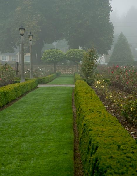 Fall Fog 7182