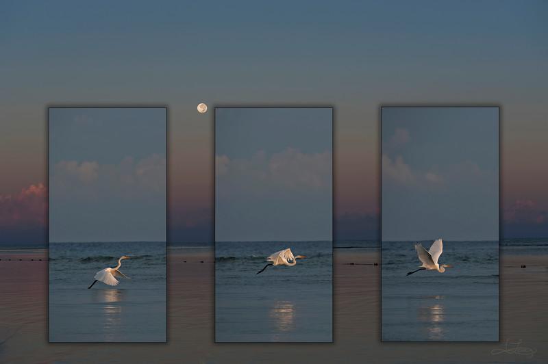 Snowy Egret Moon