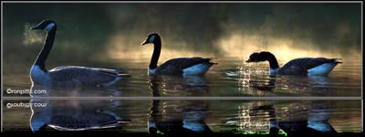 Gooselight