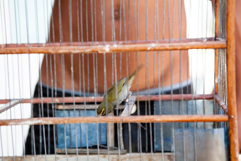 CIENFUEGOS. CUBAN BOY WITH A CAGED BIRD.