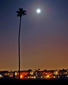 Moon Tree 1