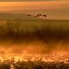 Dawn - Bosque del Apache, NM