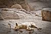 Quarry Dogs