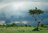 Masai Mara 1c