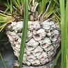 SHELL_ENCRUSTED_POT