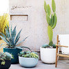 Design Within Reach - Cup Planters