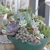 Potted_Succulents2