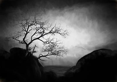 Rock On Tree
