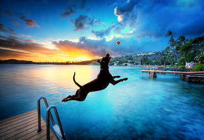 Leaping For Sunset
