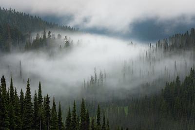 Mist-shrouded forest, Glacier Peak Wilderness, Washington