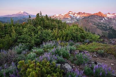 Sunrise on Mt. Adams and the Goat Rocks, southern Washington Cascades