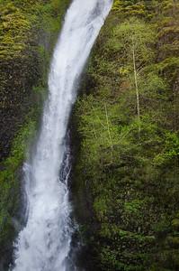 Spring foliage beside Lower Horsetail Falls, Columbia River Gorge, Oregon