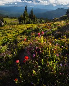 Subalpine flower garden, Goat Rocks Wilderness, Washington