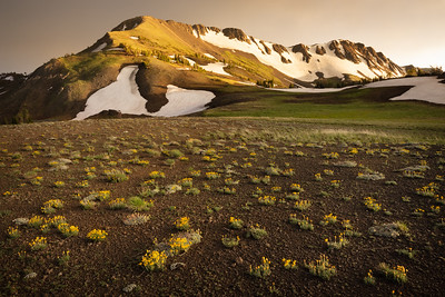 Sunset light over golden alpine flowers, Wallowa Mountains, Oregon