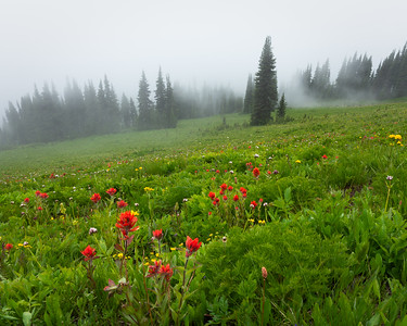 Meadow under fog, Glacier Peak Wilderness, Washington