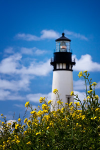 Yellow flowers and the Yaquina Head Lighthouse in Oregon
