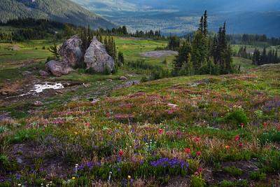 Meadow in bloom, Goat Rocks Wilderness, Washington
