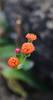 Makapuu Flower