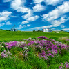 Purple Flowers-Grain Silos-Palouse_Jun112013_1575