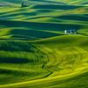 Green Paloose from Steptoe Butte_Jun112013_2704
