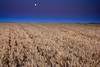 Palouse Moon