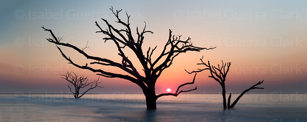 Botany Bay Trees, South Carolina